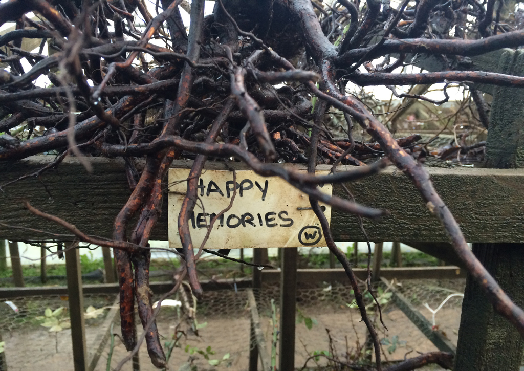 Happy Memories