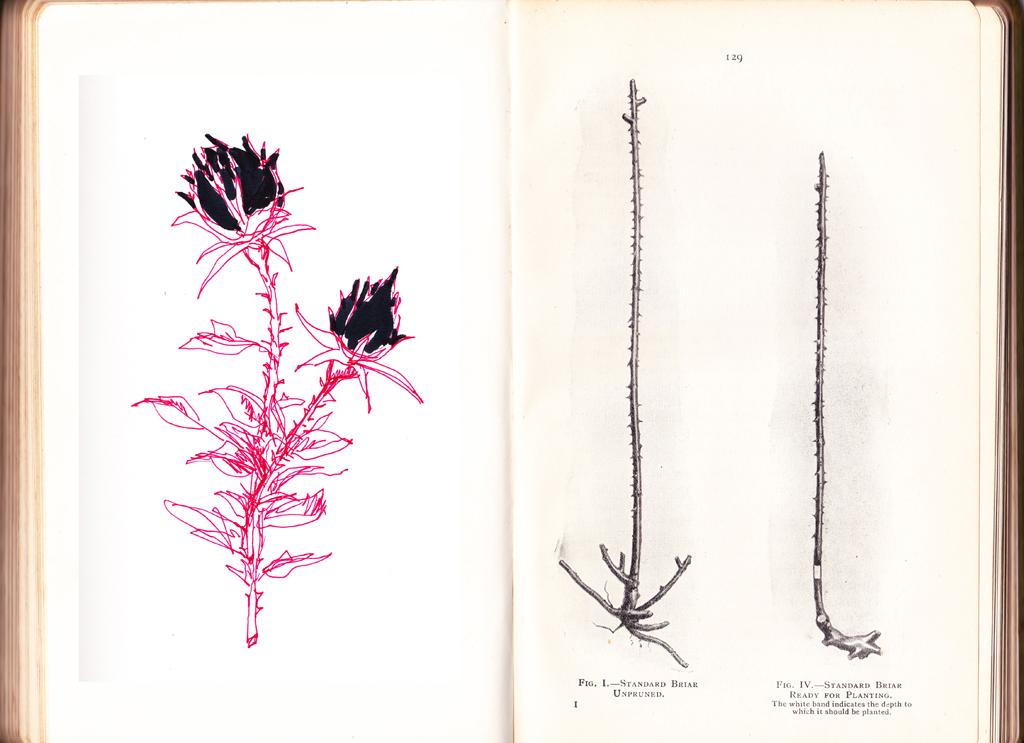 alison carlier -sketch